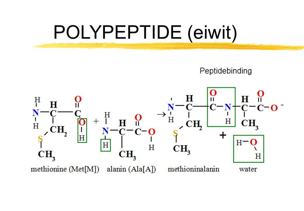 POLYPEPTIDE (eiwit) Peptidebinding ˜