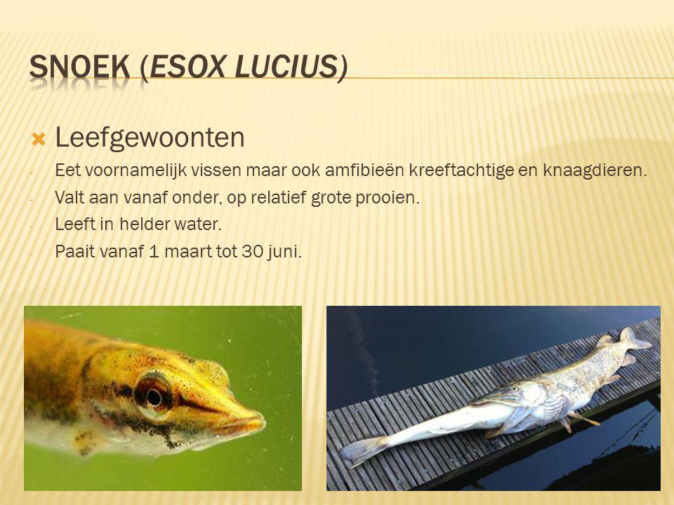 Snoek (Esox lucius) Leefgewoonten