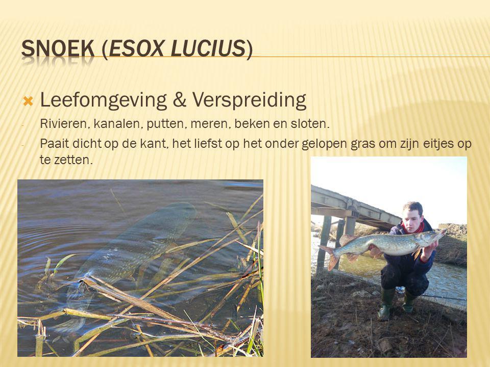 snoek (Esox lucius) Leefomgeving & Verspreiding