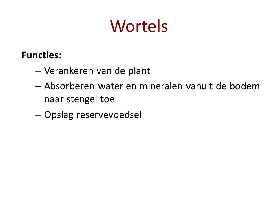 Wortels Functies: Verankeren van de plant