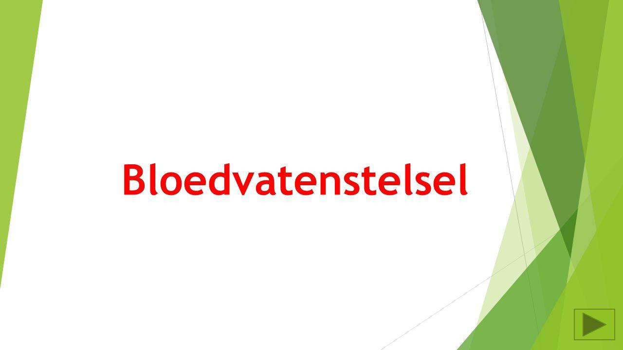 Bloedvatenstelsel