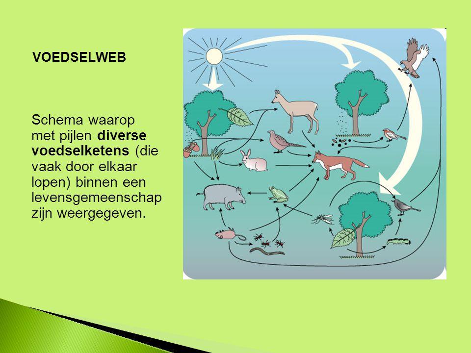 VOEDSELWEB Schema waarop met pijlen diverse voedselketens (die vaak door elkaar lopen) binnen een levensgemeenschap zijn weergegeven.