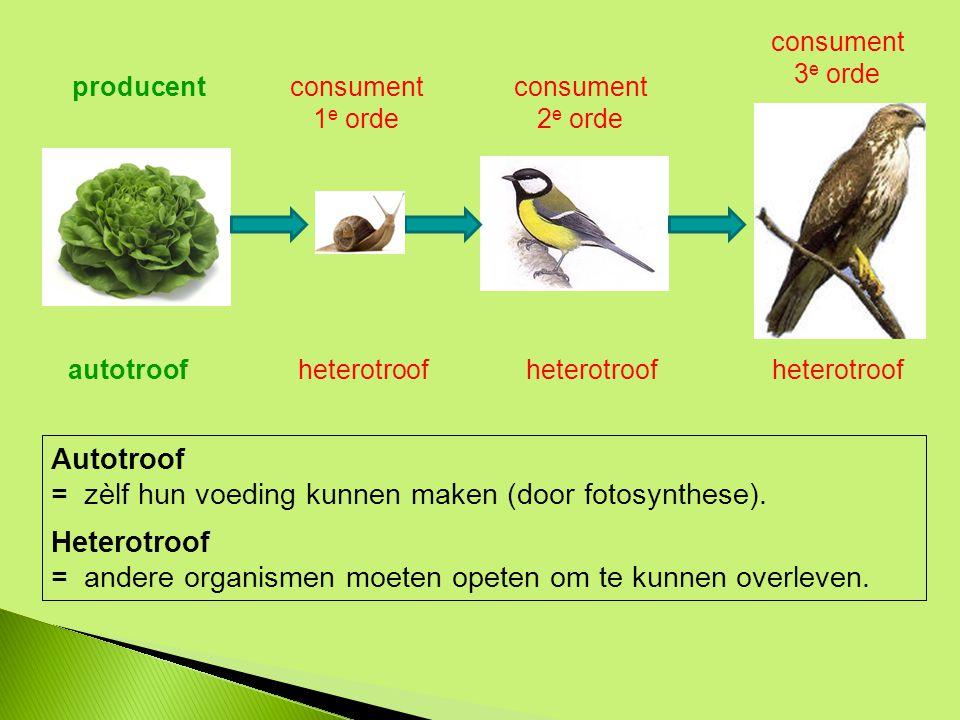 = zèlf hun voeding kunnen maken (door fotosynthese). Heterotroof