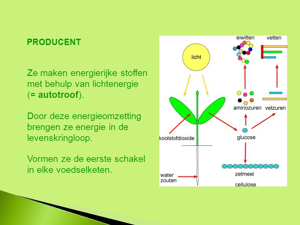 Door deze energieomzetting brengen ze energie in de levenskringloop.