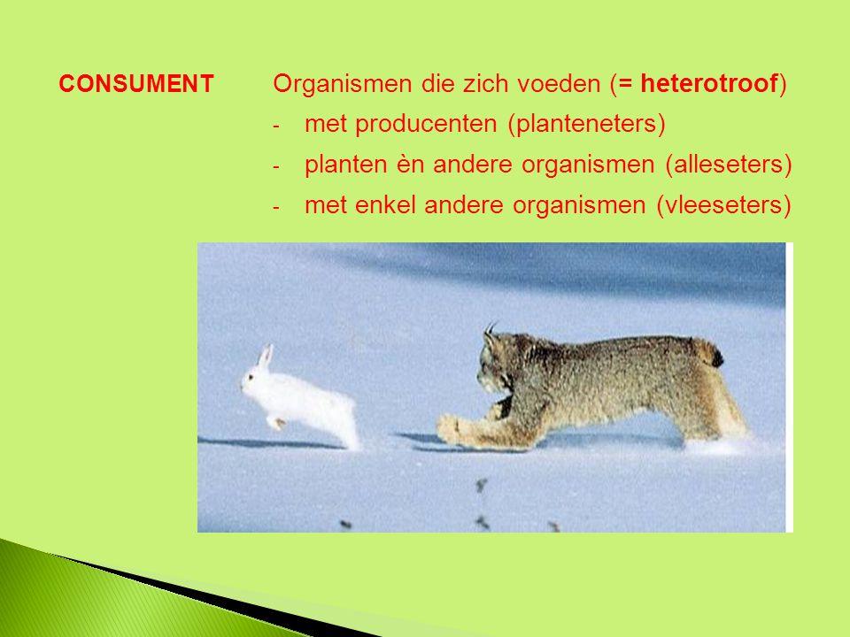 Organismen die zich voeden (= heterotroof)