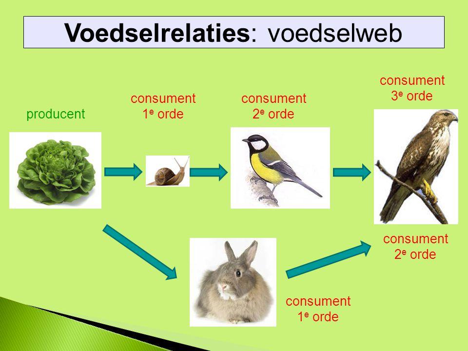 Voedselrelaties: voedselweb