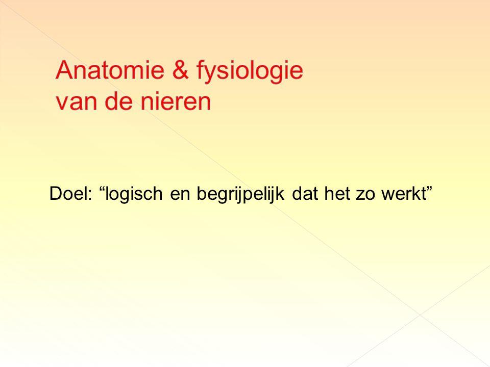 Anatomie & fysiologie van de nieren