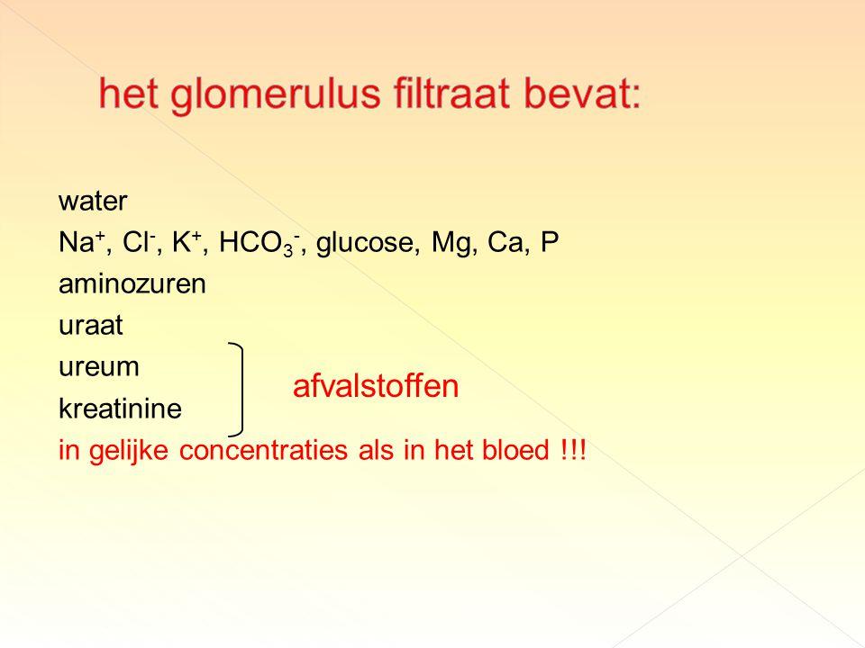 het glomerulus filtraat bevat: