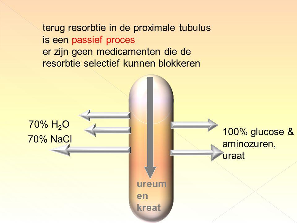 terug resorbtie in de proximale tubulus