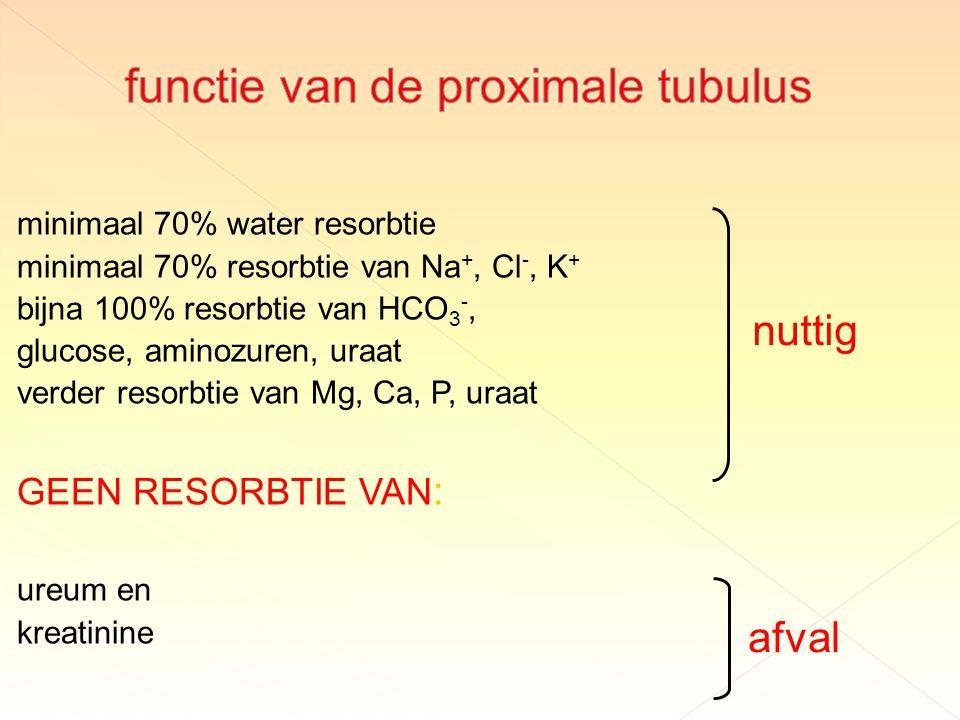 functie van de proximale tubulus