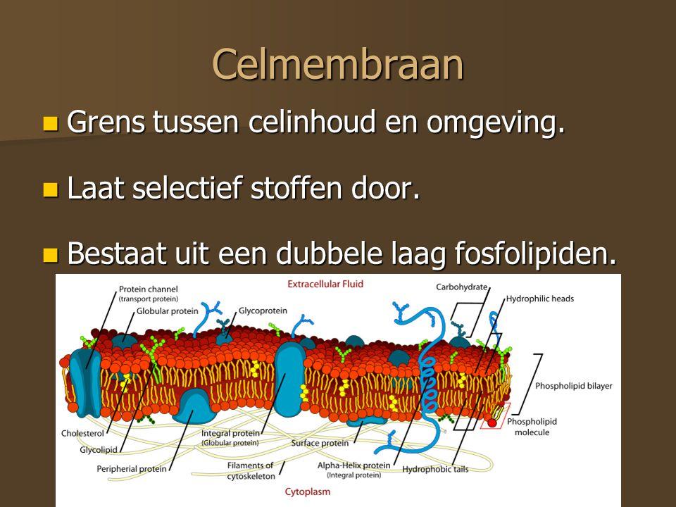 Celmembraan Grens tussen celinhoud en omgeving.