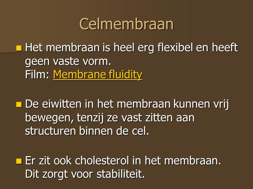 Celmembraan Het membraan is heel erg flexibel en heeft geen vaste vorm. Film: Membrane fluidity.