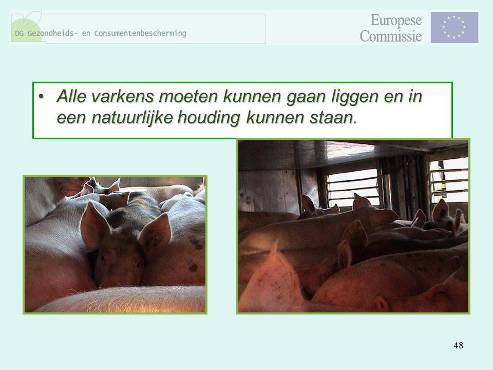 Alle varkens moeten kunnen gaan liggen en in een natuurlijke houding kunnen staan.