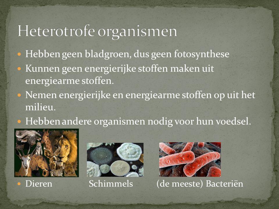 Heterotrofe organismen