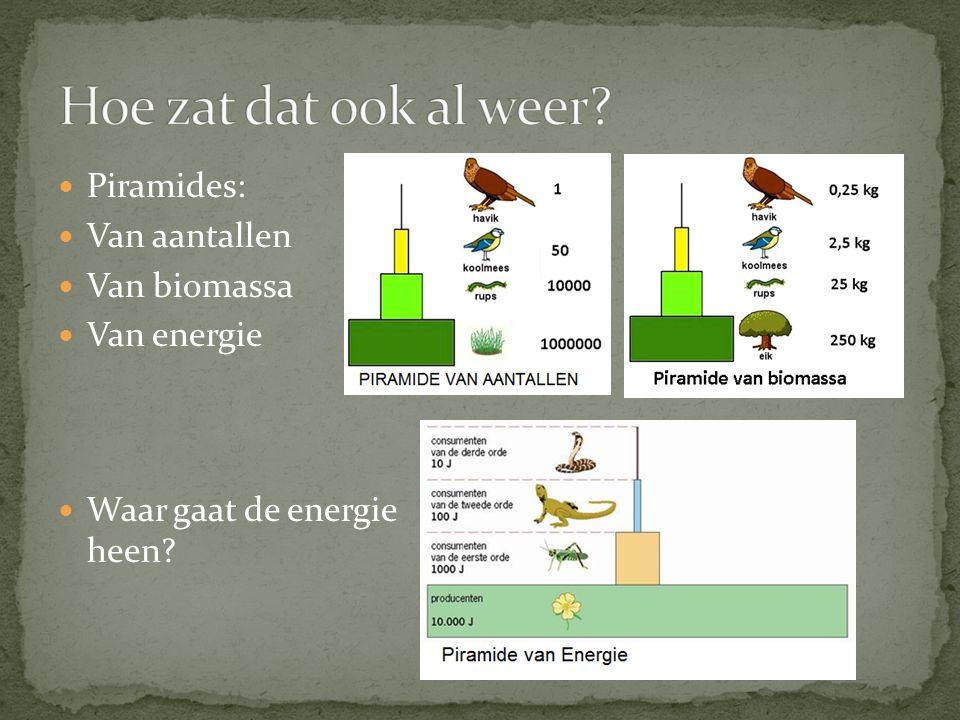 Hoe zat dat ook al weer Piramides: Van aantallen Van biomassa
