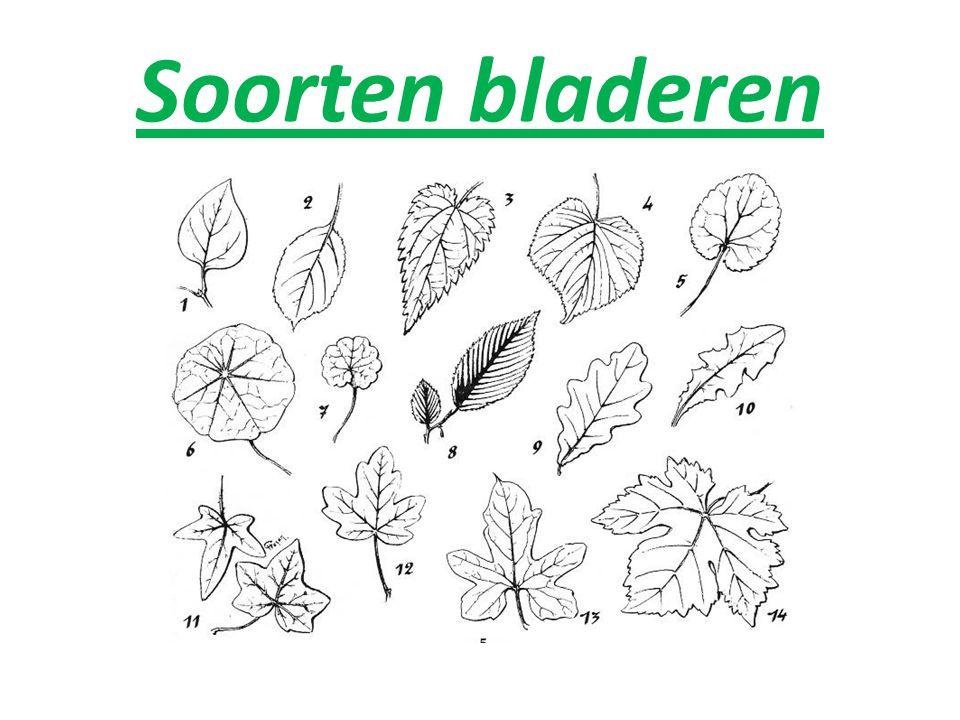 Soorten bladeren