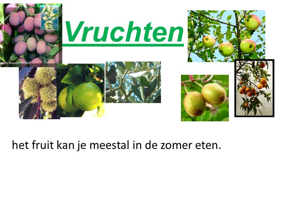 Vruchten het fruit kan je meestal in de zomer eten.