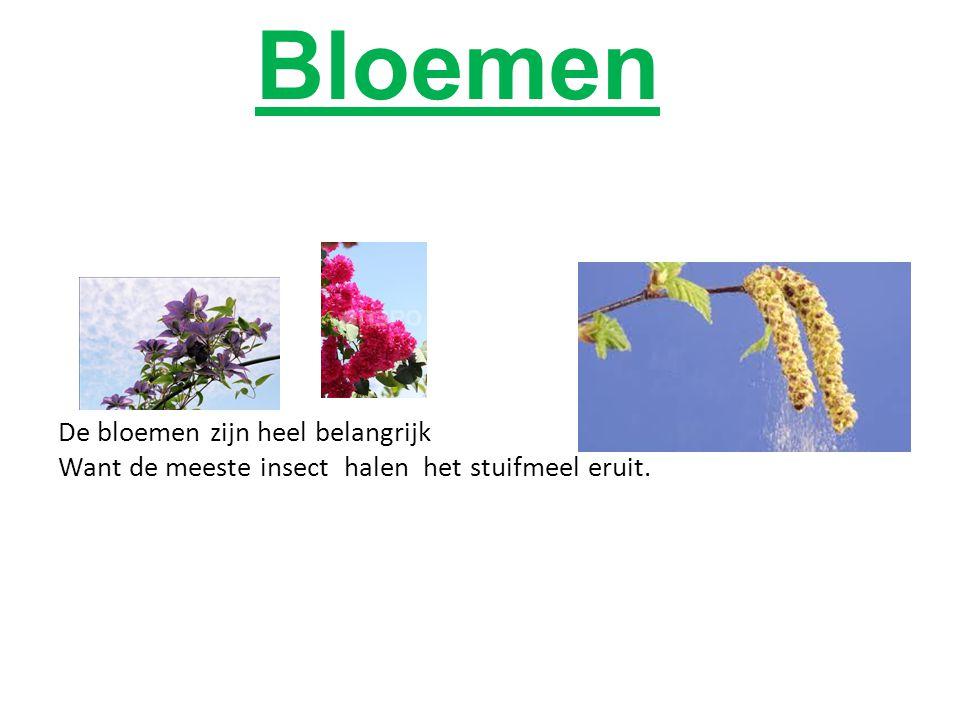 Bloemen De bloemen zijn heel belangrijk