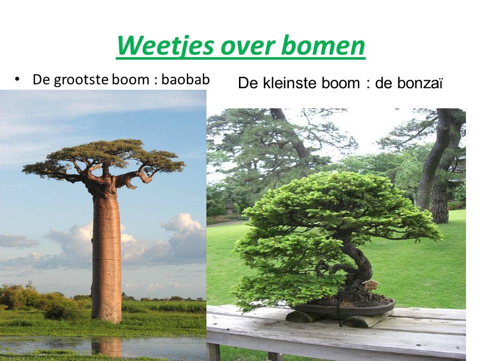 Weetjes over bomen De grootste boom : baobab