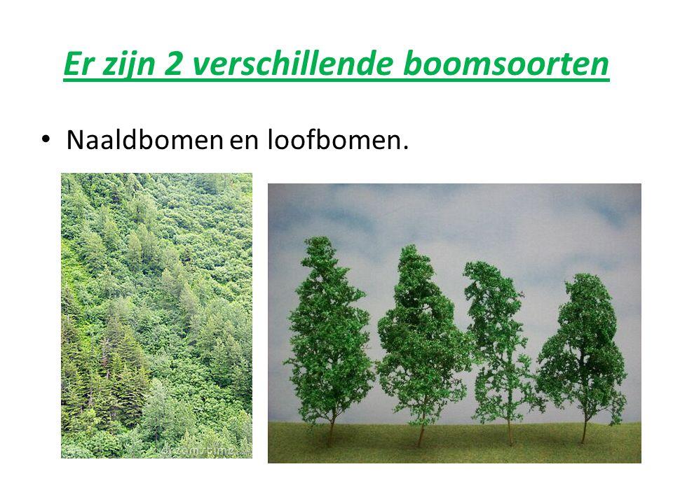 Er zijn 2 verschillende boomsoorten