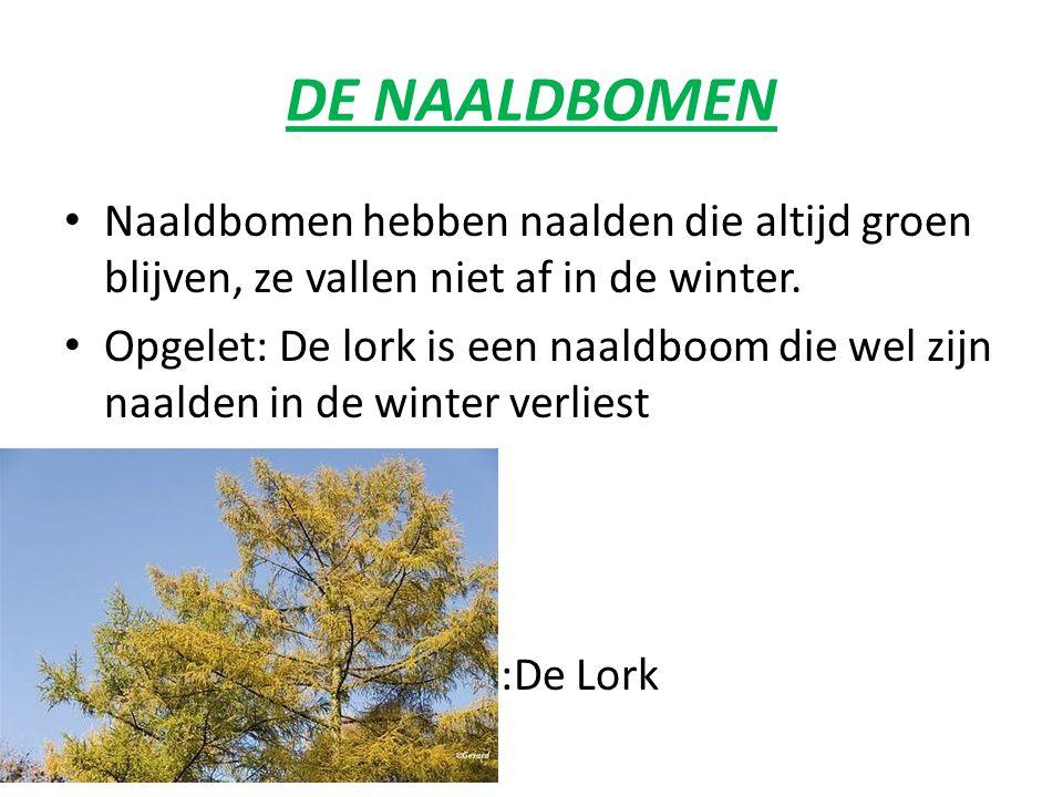DE NAALDBOMEN Naaldbomen hebben naalden die altijd groen blijven, ze vallen niet af in de winter.