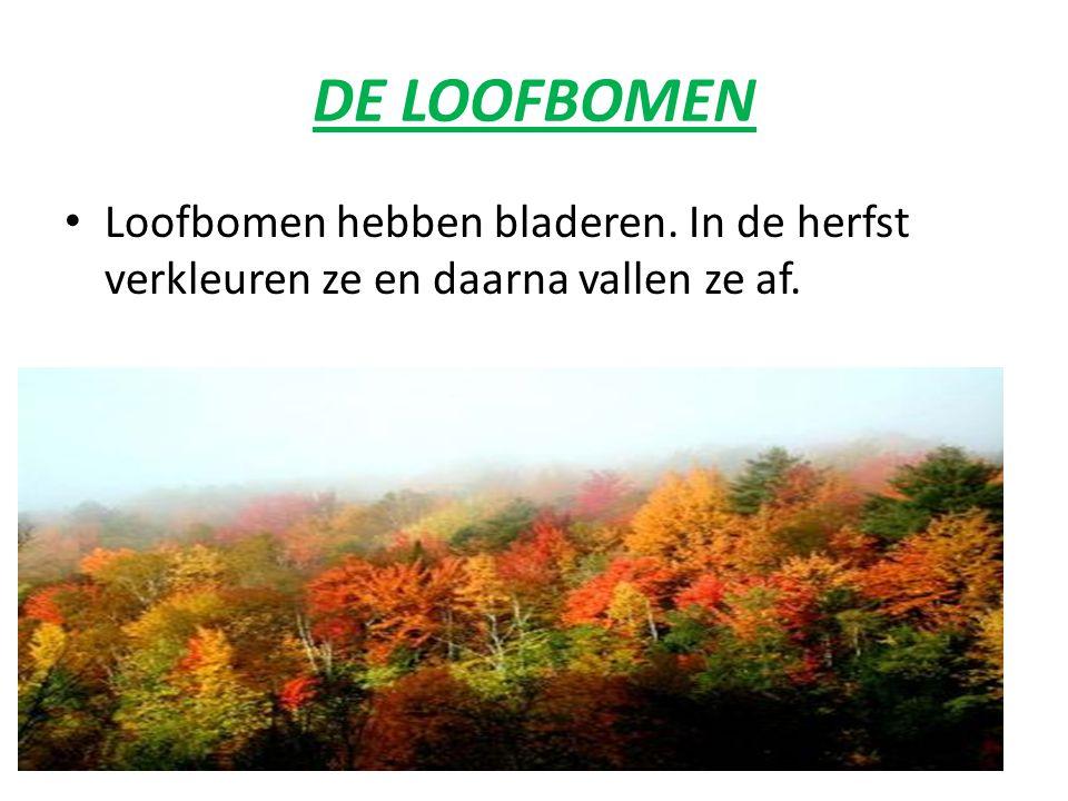 DE LOOFBOMEN Loofbomen hebben bladeren. In de herfst verkleuren ze en daarna vallen ze af.