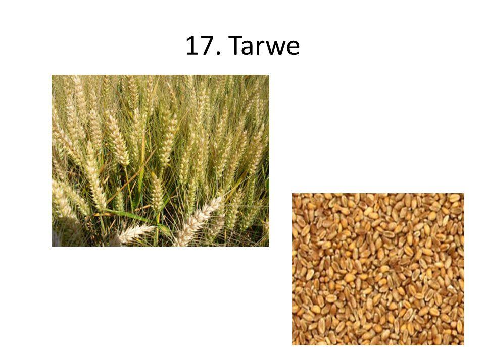 17. Tarwe