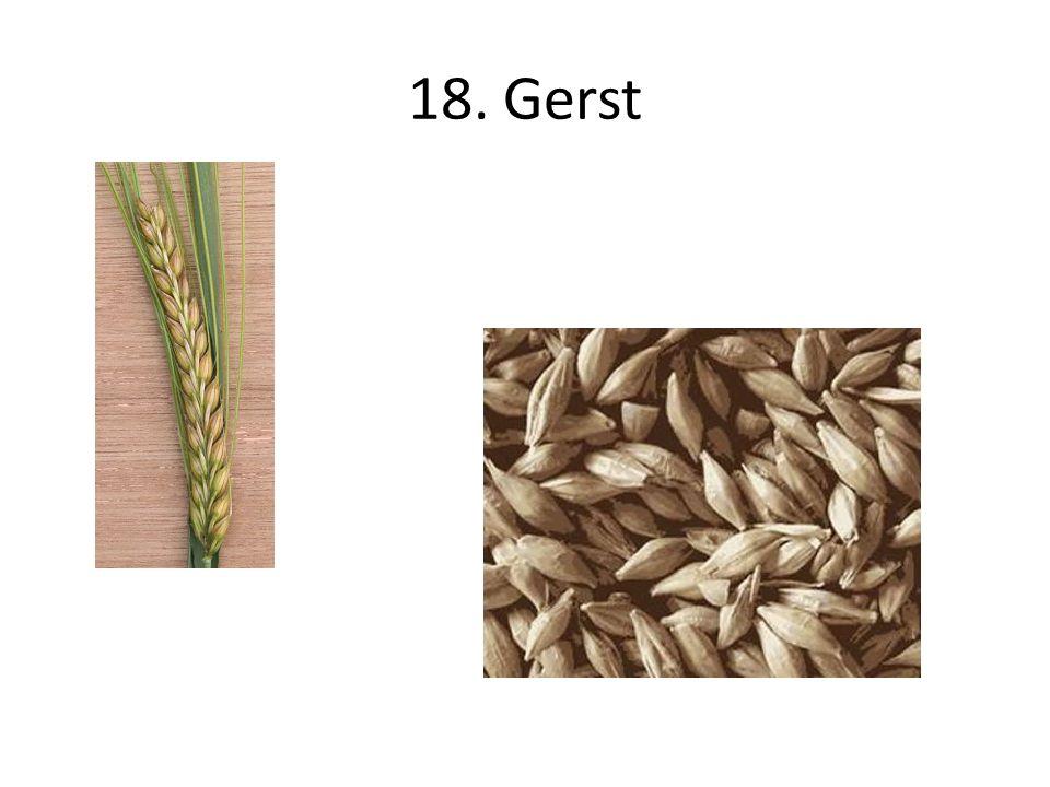 18. Gerst