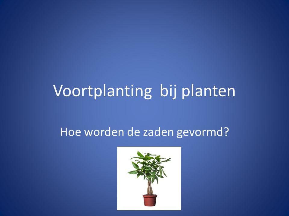 Voortplanting bij planten