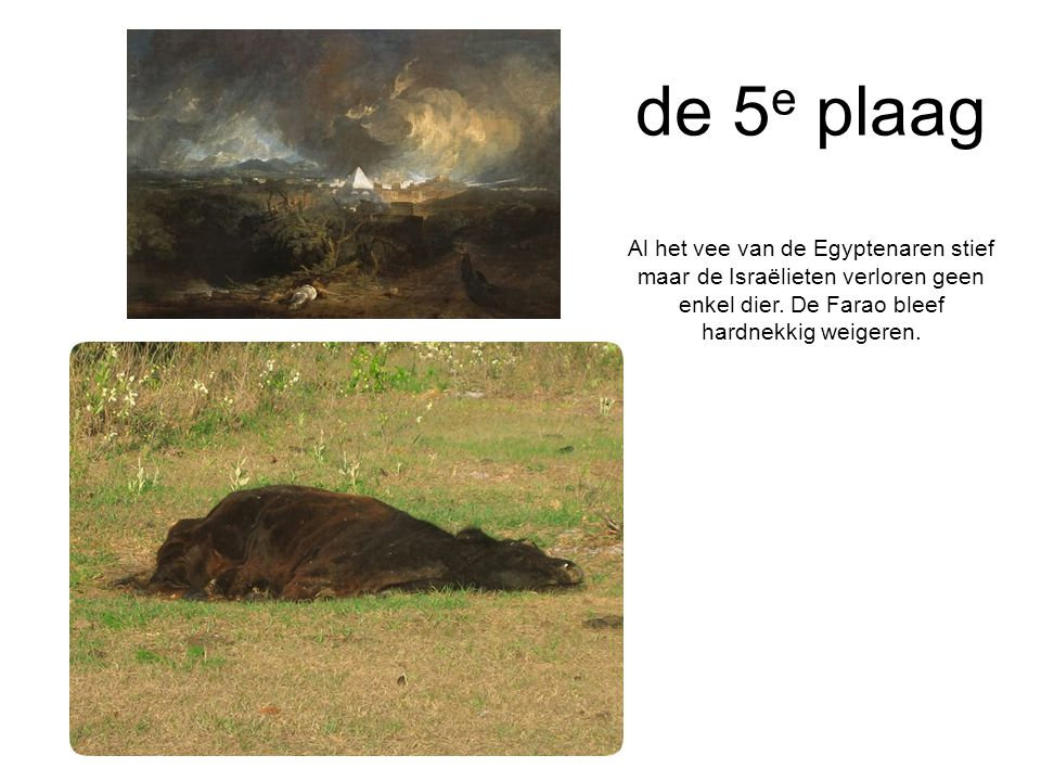 de 5e plaag Al het vee van de Egyptenaren stief maar de Israëlieten verloren geen enkel dier.
