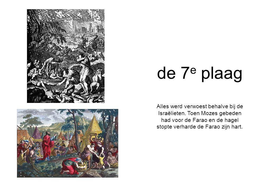 de 7e plaag Alles werd verwoest behalve bij de Israëlieten.