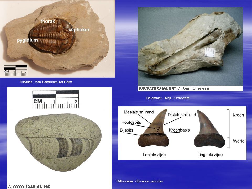 Trilobiet - Van Cambrium tot Perm