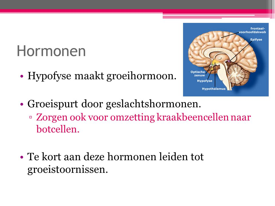Hormonen Hypofyse maakt groeihormoon.