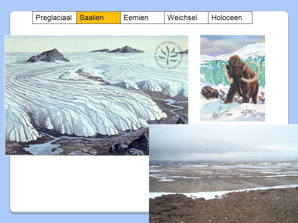 Preglaciaal Saalien Eemien Weichsel Holoceen