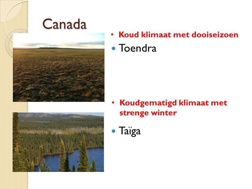 Canada Toendra Taïga Koud klimaat met dooiseizoen
