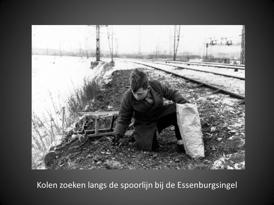 Kolen zoeken langs de spoorlijn bij de Essenburgsingel