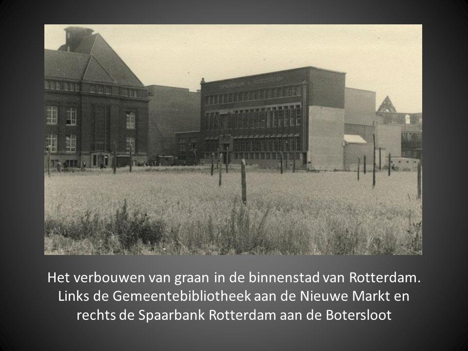 Het verbouwen van graan in de binnenstad van Rotterdam.