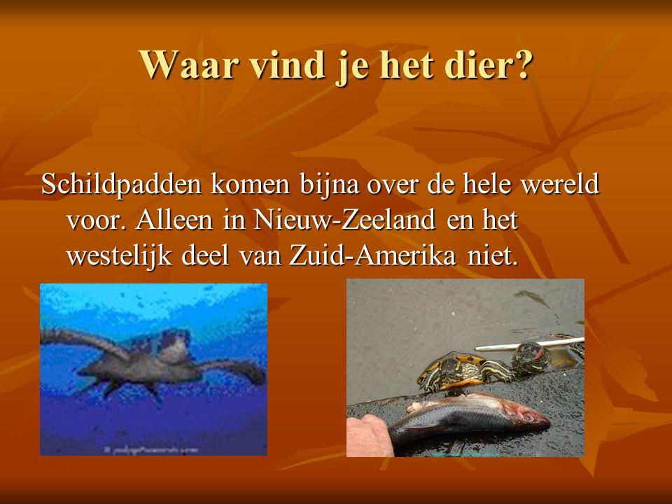 Waar vind je het dier. Schildpadden komen bijna over de hele wereld voor.