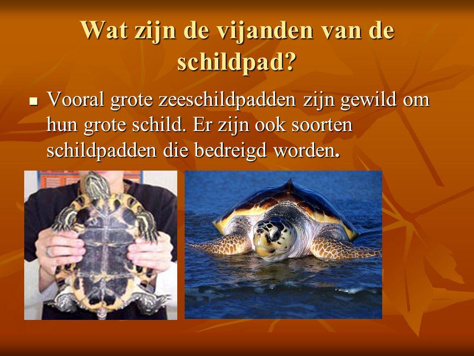 Wat zijn de vijanden van de schildpad