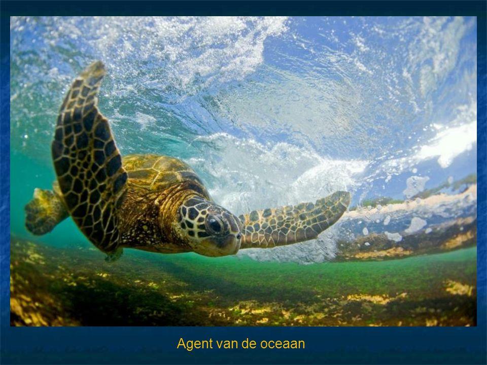 Agent van de oceaan