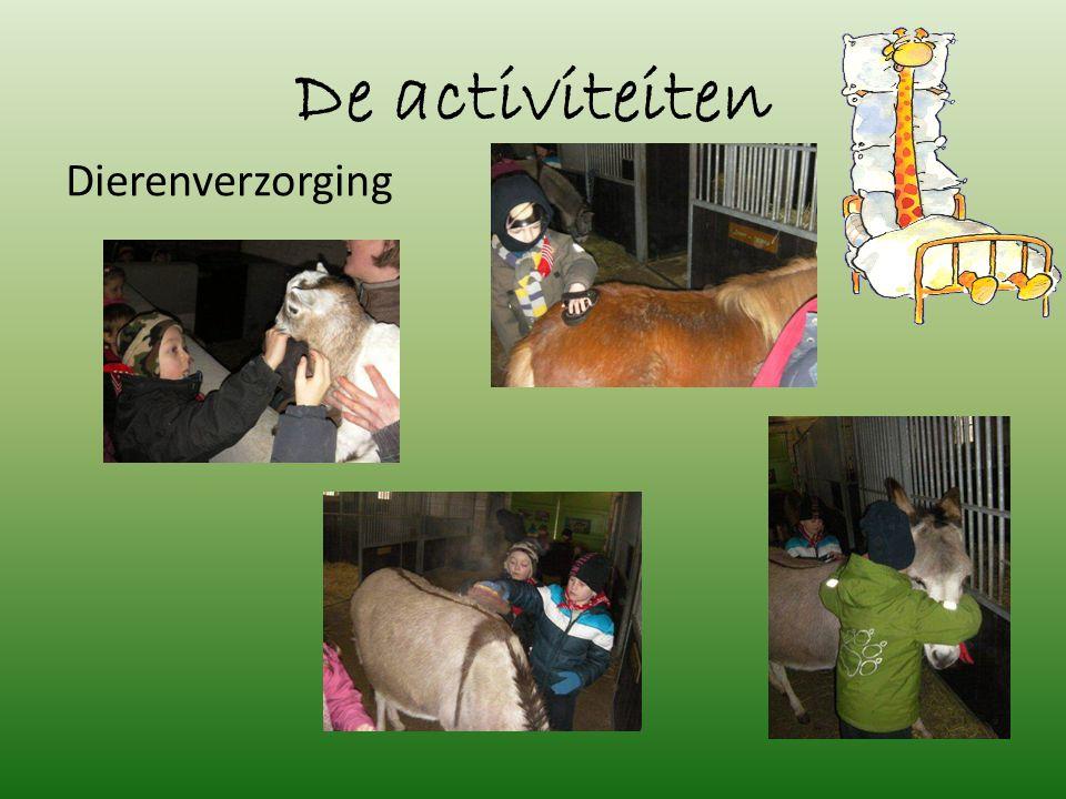 De activiteiten Dierenverzorging