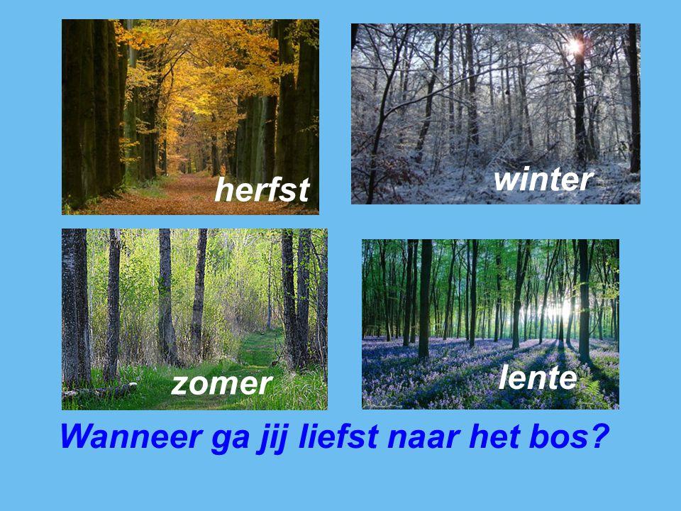 winter herfst lente zomer Wanneer ga jij liefst naar het bos