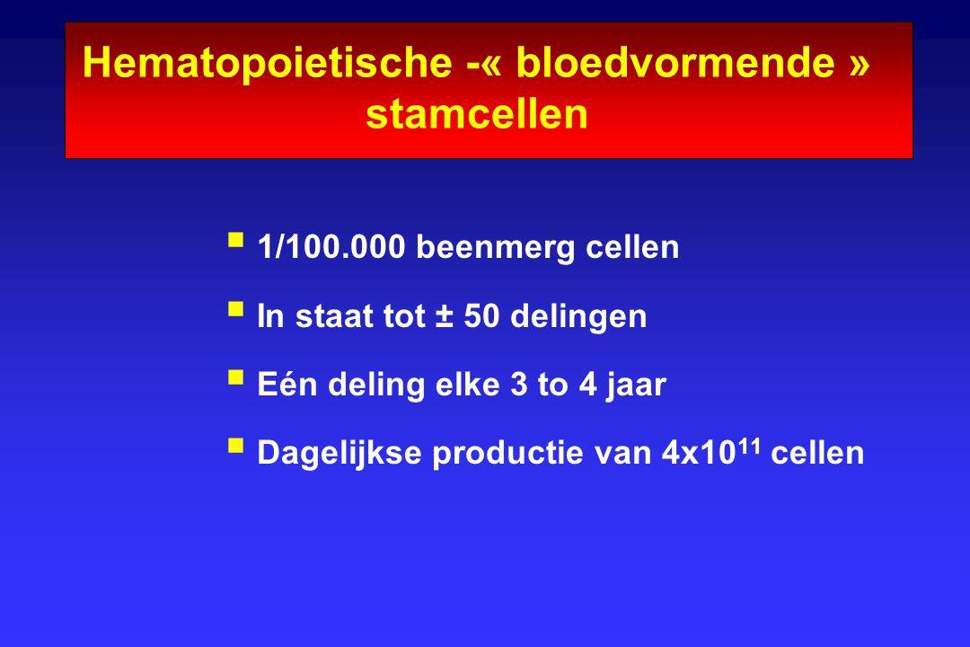 Hematopoietische -« bloedvormende » stamcellen