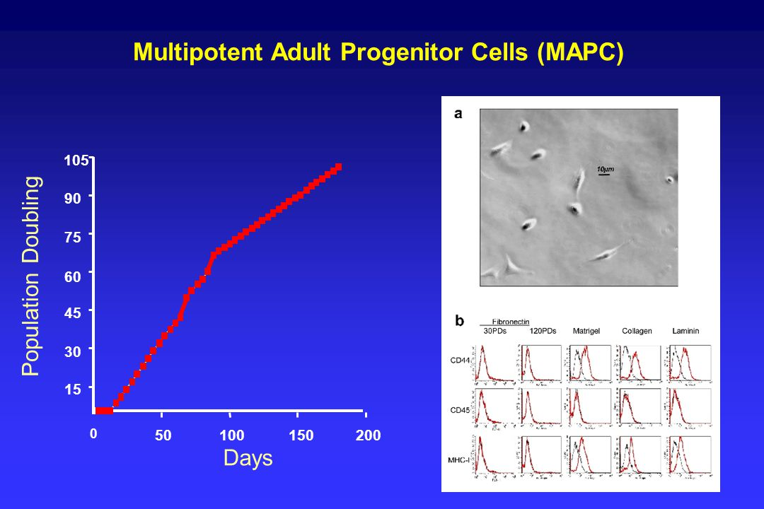 Multipotent Adult Progenitor Cells (MAPC)
