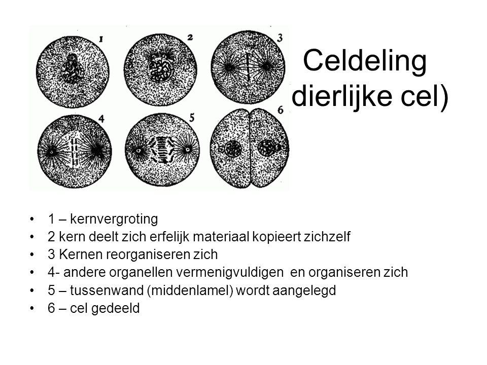 Celdeling (dierlijke cel)