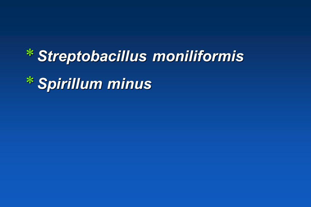 Streptobacillus moniliformis