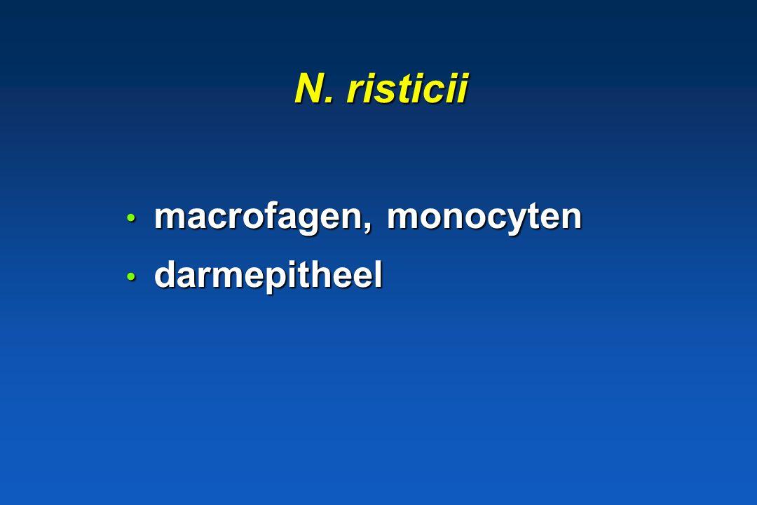 N. risticii macrofagen, monocyten darmepitheel