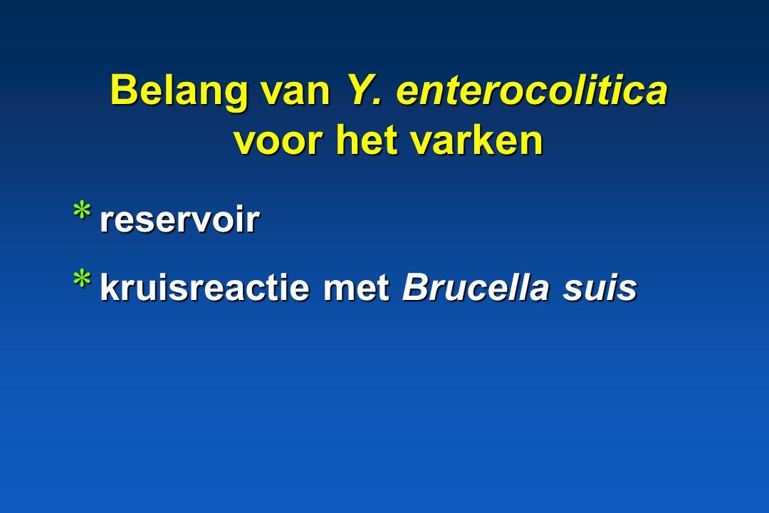 Belang van Y. enterocolitica voor het varken