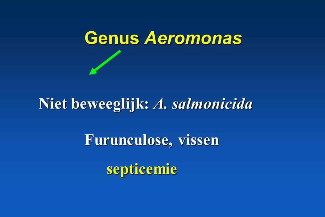 Genus Aeromonas Niet beweeglijk: A. salmonicida Furunculose, vissen