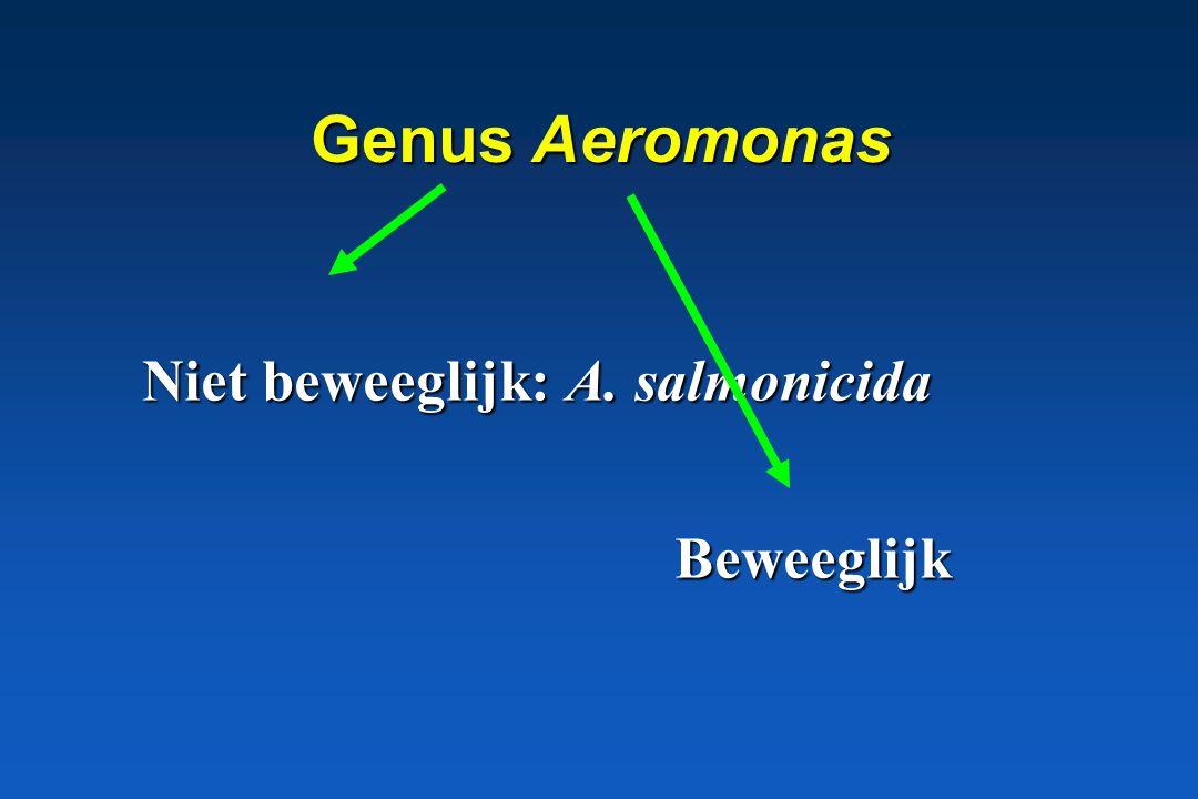 Genus Aeromonas Niet beweeglijk: A. salmonicida Beweeglijk